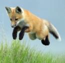fox67rus